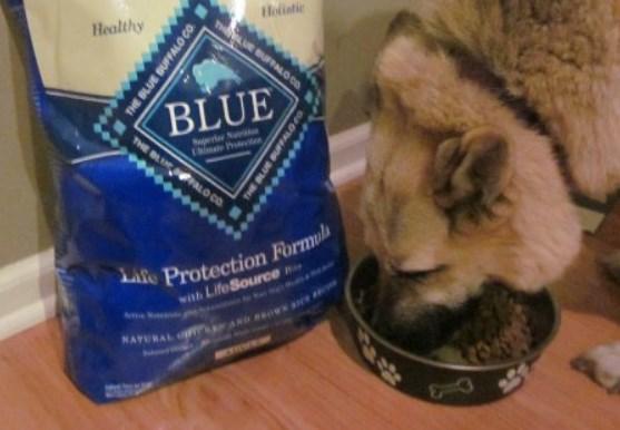 Dog Food Blue Buffalo Reviews