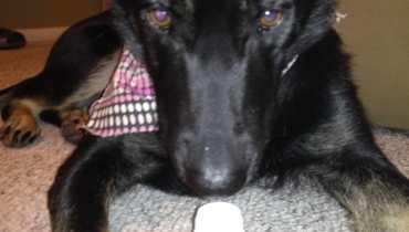 Advil For Dogs