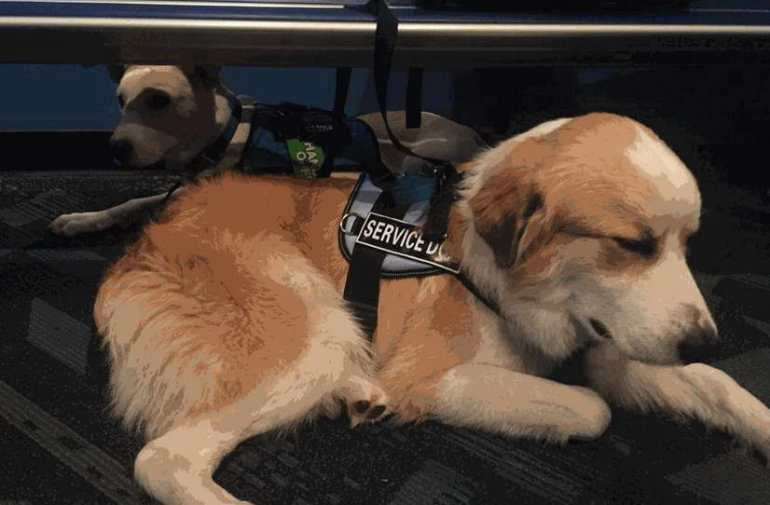 Find Anxiety Service Dog