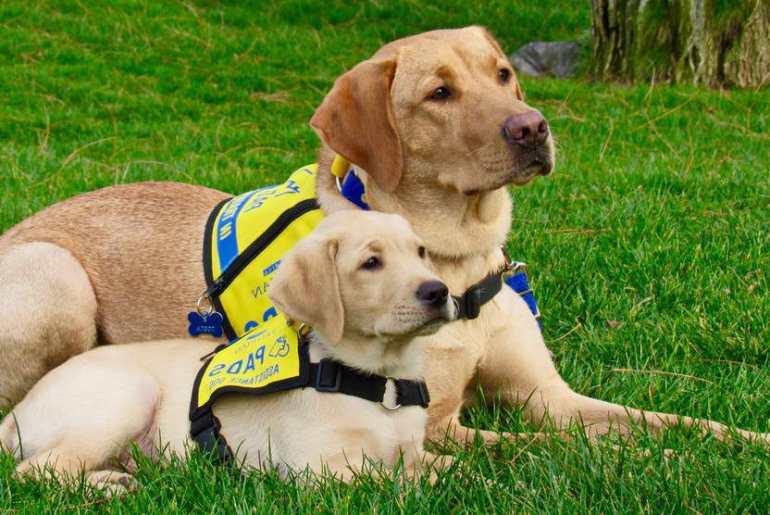 Assistance Dogs International