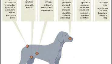 Dog Cancer Symptoms