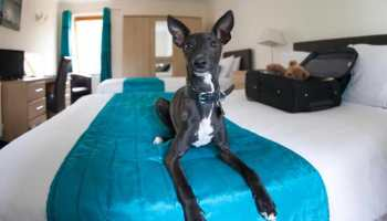 Find Dog Friendly Apartments Near Me | petswithlove us