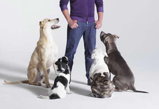 Dog Whisperer Tips