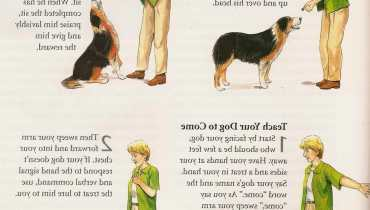 Hand Signals For Dogs