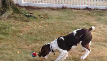 Hingham Dog Care