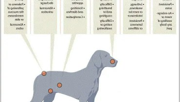 Symptoms Of Cancer In Dogs