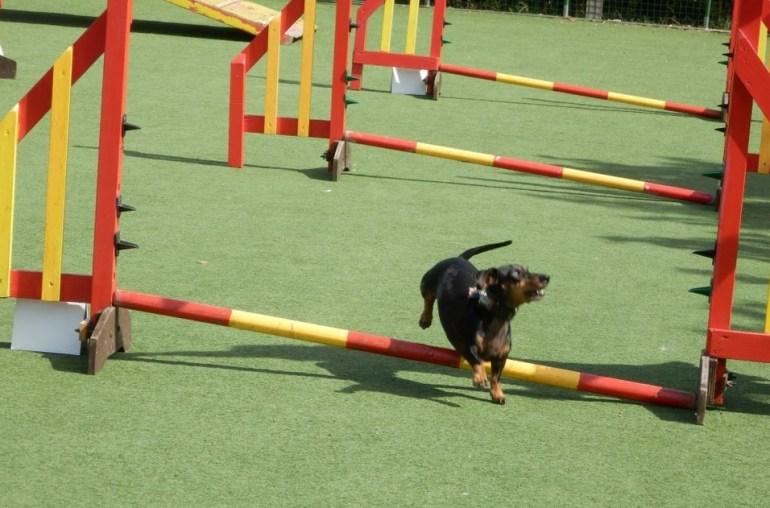 Three Rivers Dog Training