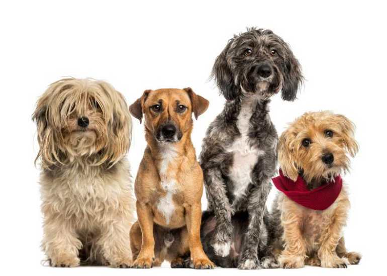 What Dog Breed Is Best For Me