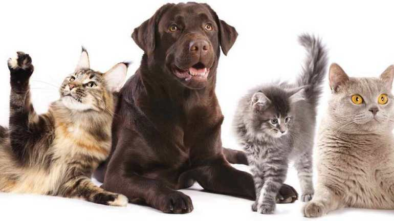 Cats And Dogs For Sale Near Me