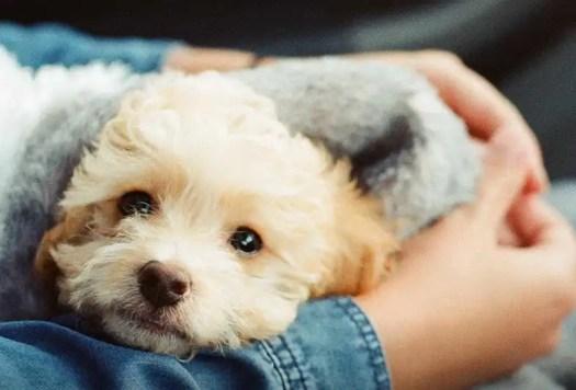 Pet Adoption Near Me Free