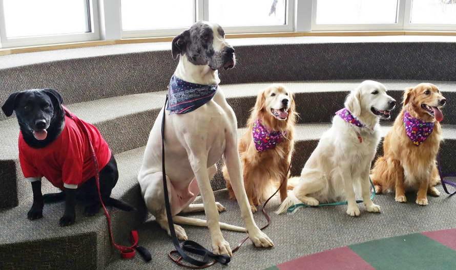 Tulsa Dog Training School