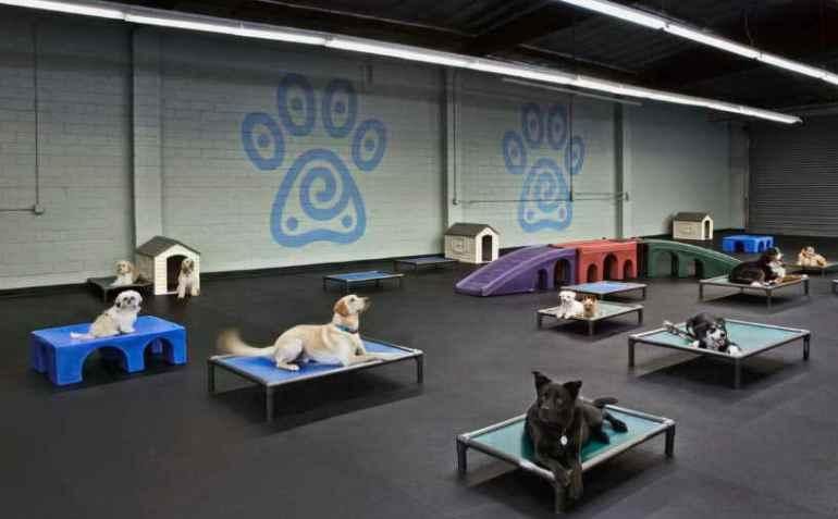Dog Daycare Overnight