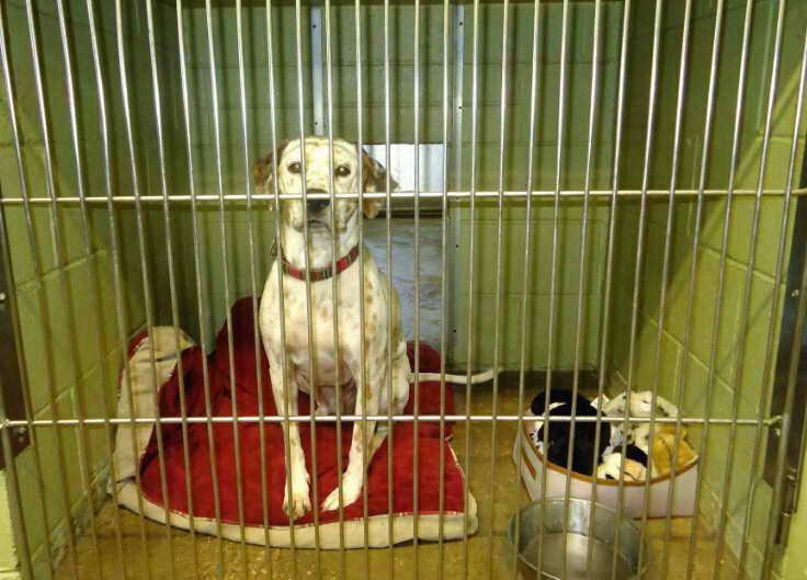 Dog Kennel San Diego