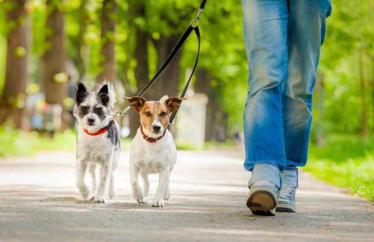 Dog Sitter Houston