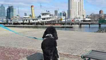 Dog Walker Baltimore