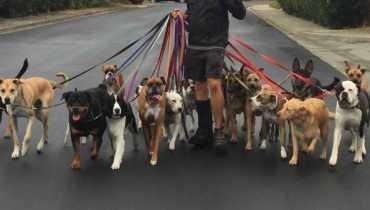 Dog Walking Services Near Me