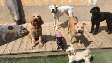 Best Dog Daycare Chicago