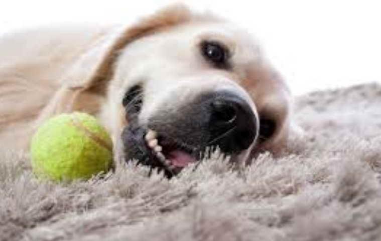 Dog Dental Care Near Me