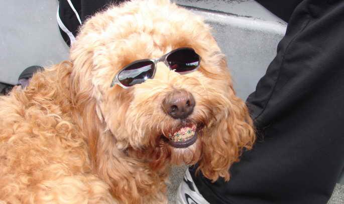 Dog Orthodontist