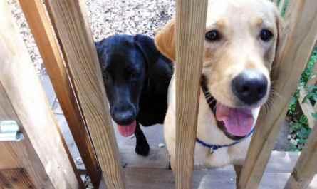 Dog Sitter New Orleans