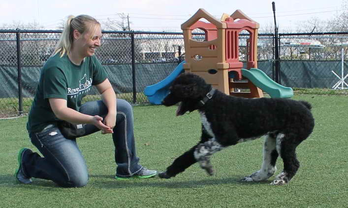 Dog Training Houston Prices