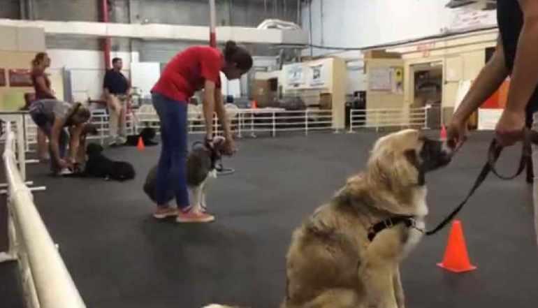 Dog Training St Pete