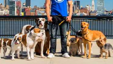 Dog Walker Hoboken Nj