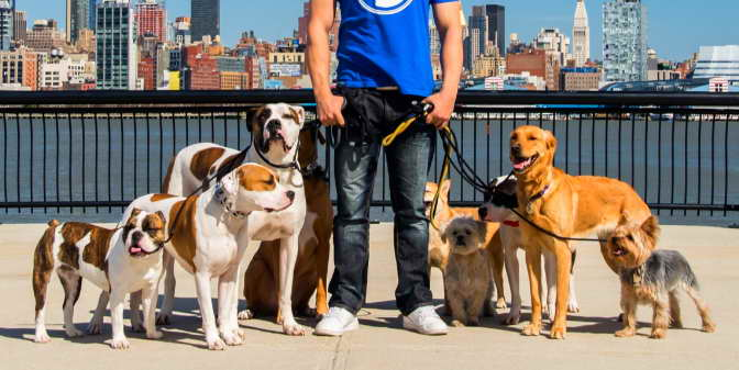 Dog Walker Hoboken Nj