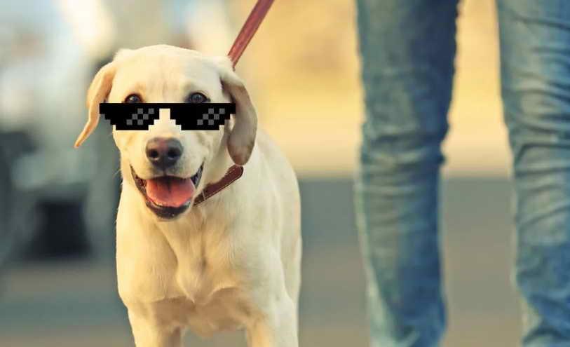 Dog Walker Nyc Rates