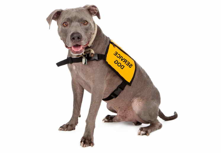Getting An Emotional Support Dog