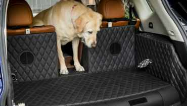 Nissan Rogue For Dogs