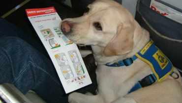 Register My Dog For Emotional Support