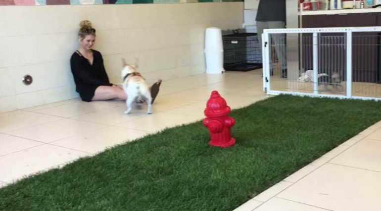 Small Dog Daycare