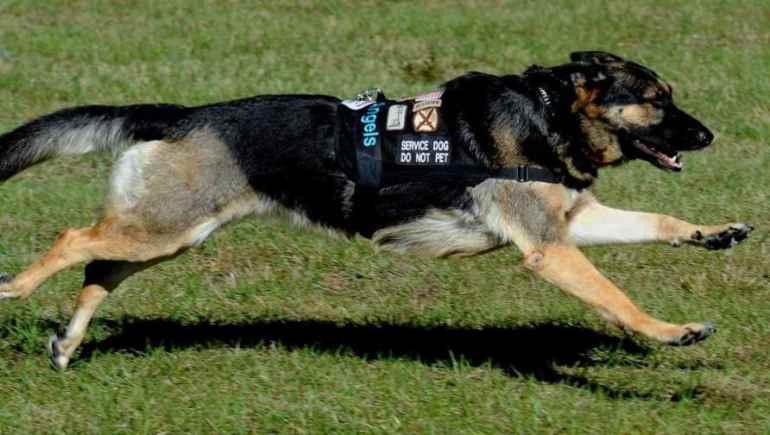 US Service Dog Registration