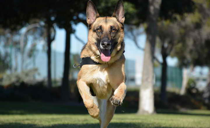 USAA Dog Insurance
