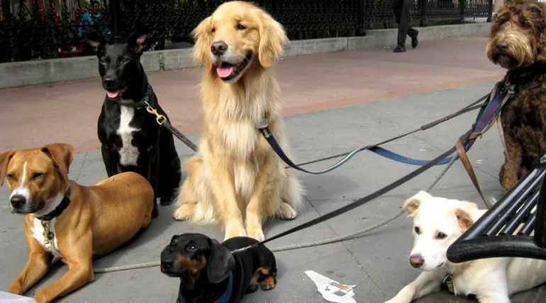 Wag Dog Walking Chicago