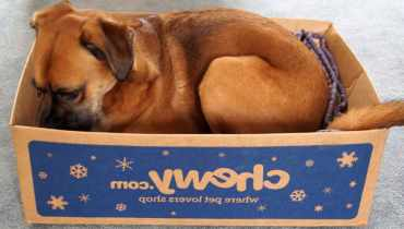 Chewy Box For Dogs