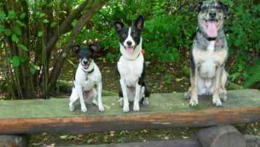 Dog Training Issaquah