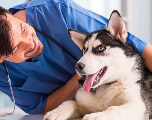 husky health insurance
