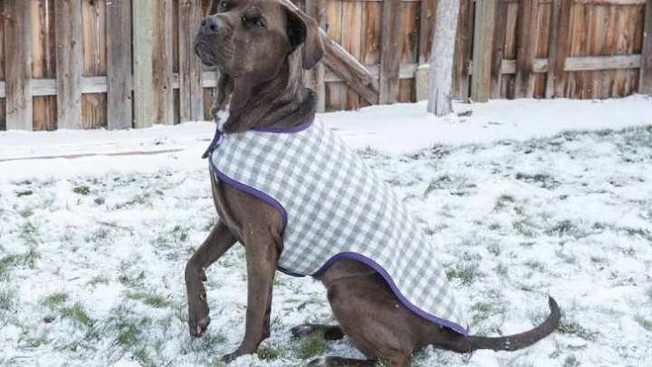 Best Dog Coat Great Dane
