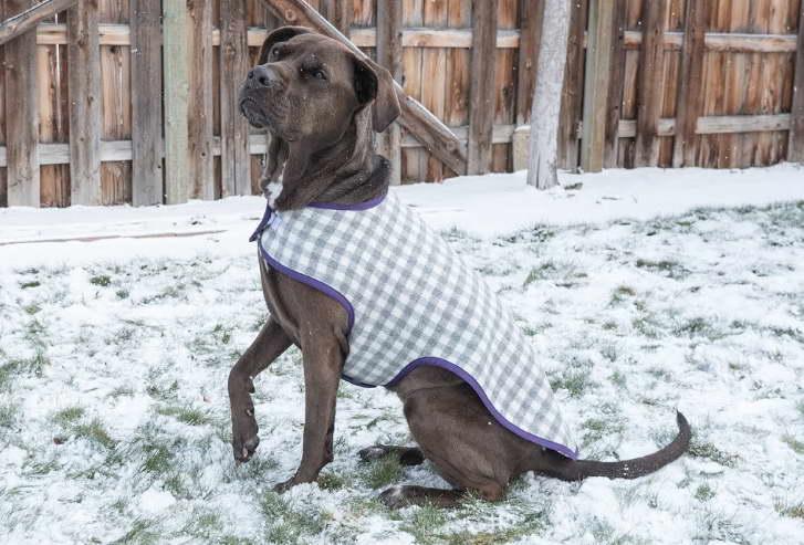 dog coat great dane