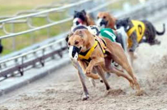 Find Greyhound Dog Track Available