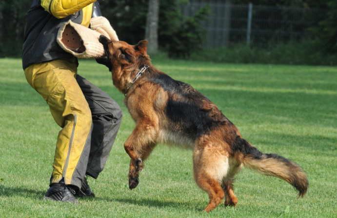 Vitamins for German Shepherd Puppies