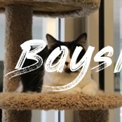 Bayside Pet Resort - 29 Photos & 35 Reviews - Pet Sitting  - Bayside Dog Boarding