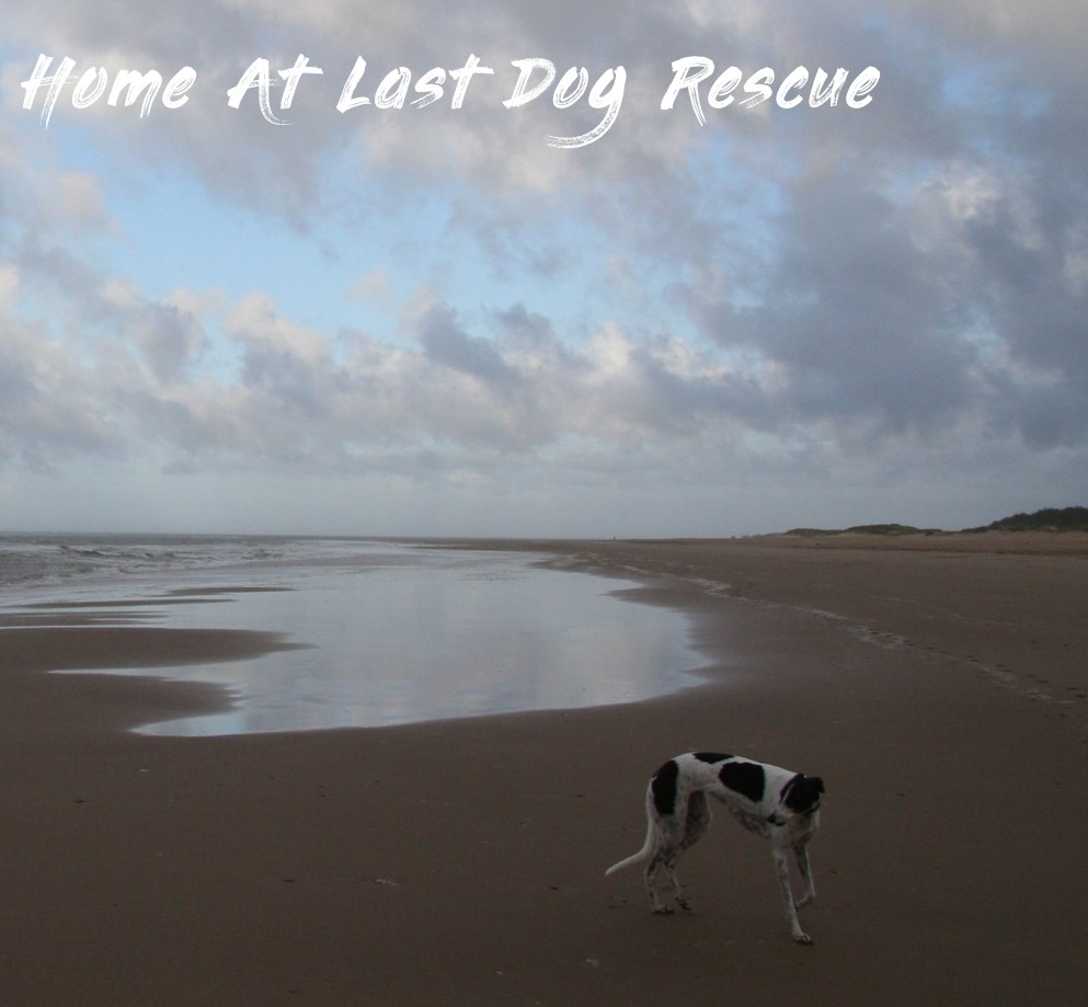Bonnie On The Beach - Home At Last Dog Rescue