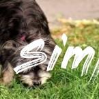 Dog Behavior Home Remedies - Best Pet Home Remedies