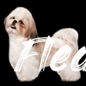 Jack Russell: Temperament, Lifespan, Grooming, Training  Petplan - Flea Bites On Dogs