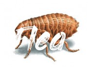 Kill Fleas on Dogs, Pets and Animals