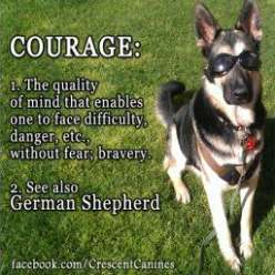 Seven Secrets About German Shepherd Dog Names That Has Never Been Revealed For The Past 2 Years   German Shepherd Dog Names