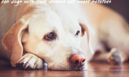 Things you should know about can dogs with liver disease eat sweet potatoes
